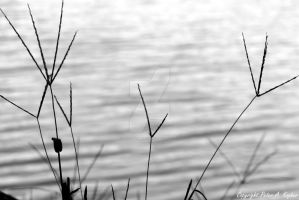 Lakeside Grasses by peterkopher