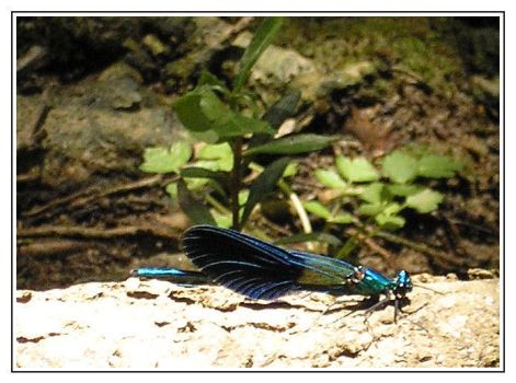 Crete: Dragonfly by Jhez