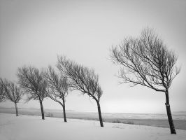 Winter by Inilein