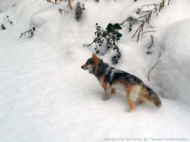 Needle Felted Wolf in the Snow by TeeganPurrington