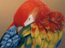 macaw in pastel by rasberry6