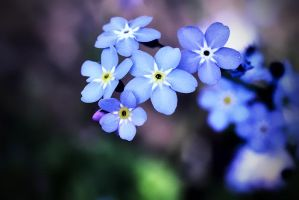 Forget Me Not by ghosttree