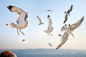 seagulls by JuanChaves