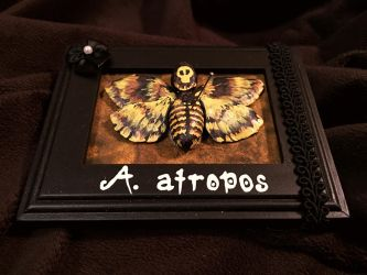 Death Head Moth Mini Sculpture by tacksidermia
