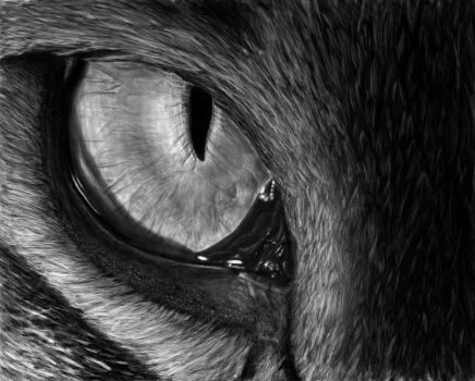 Eye of the tiger by charlie733