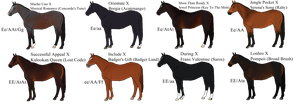 2017 Thoroughbred Imports (1/8 available) by Spotted-Tabby-Cat