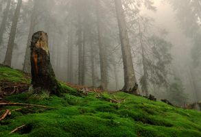 Enchanted forest by Lor1en