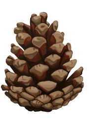 Pine cone by Aakami