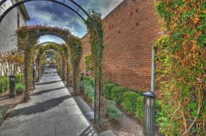Rose and jasmin arches by PaulWeber