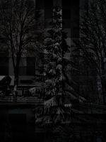 Untitled 1 - Winter of '09 - 1 by Blacktommer35