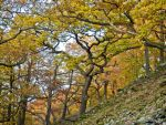 Oak forest on the Lindenberg ridge by zeitspuren