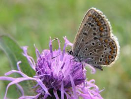 Butterfly on a flower by QuiZ04291993