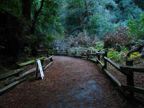 Forest Path 2 by Shobie-stock