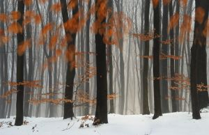 Red forest by manroms
