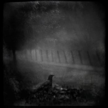 Night Messenger by intao