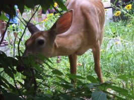 Doe, a Deer - Not Bothered by JennHolton