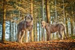 .: Wolves deep in the Forest :. by Frank-Beer