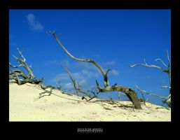 Driftwood Dunes by Isquiesque