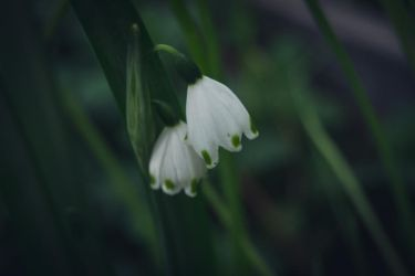 White Bells by ItBazooka