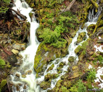 Mossy Falls by BivinsPhotography