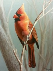 A touch of Red, Cardinal by pm3013