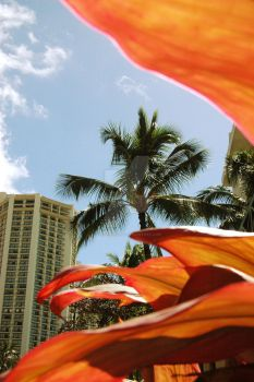 Retro Leaf Waikiki 2 by CalenthrellII