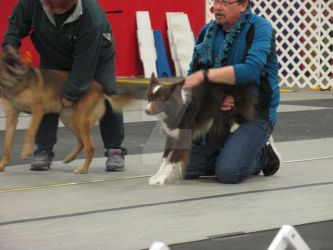 A Dog From The Flyball Tournament I went to! by XxLest5000xX
