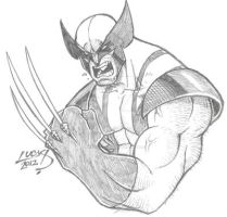 Wolverine SKETCH 2012 by LucasAckerman