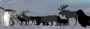Tokota Height Comparison Chart by Tauriiga
