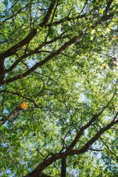 Canopy by screenname911