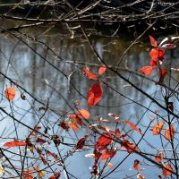 Feuilles sur Riviere I by hyneige