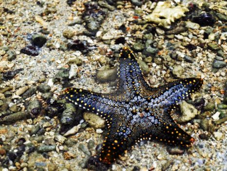 See A Starfish, Think Of Me. by angelheartzyou