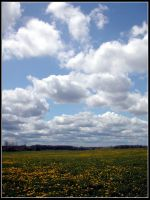 Yellow Dusted Fields by bdusen