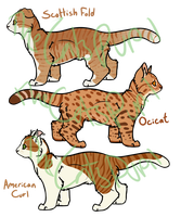 Cat Adoptables 9 [Closed] by TheCatsPupil