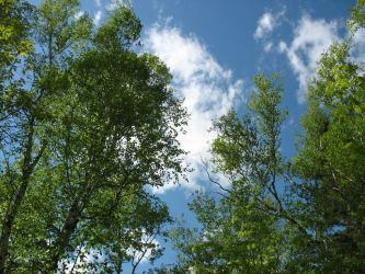 Trees and Sky by deadeye-stock