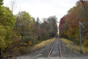 Foliage and Railroad Tracks In New York 2 by Miss-Tbones