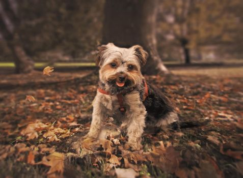 Dog and leaves by Olga17