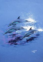 pencil dolphins by nachoriesco