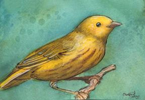 Yellow Warbler by BlueBirdie