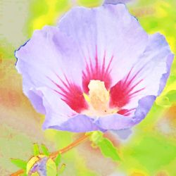 Pastels 800 By 800 (5) by jannied