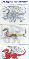 Dragon Anatomy: Wyldfire by Wyldfire7