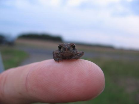 Finger Frog by Wikarla