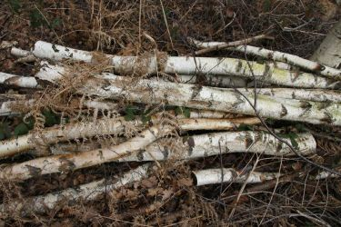 Birch Tree Logs by Kitsch-Craft
