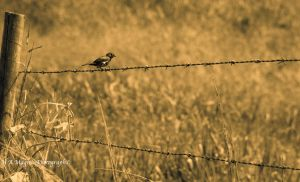 old bird in old photo! by HenriqueAMagioli