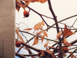 .The last leaves of winter. by viviluong