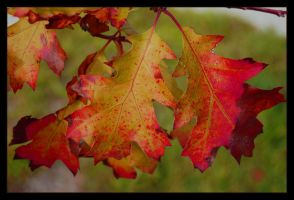 Autumn leaves by ForgivenDreamSoul