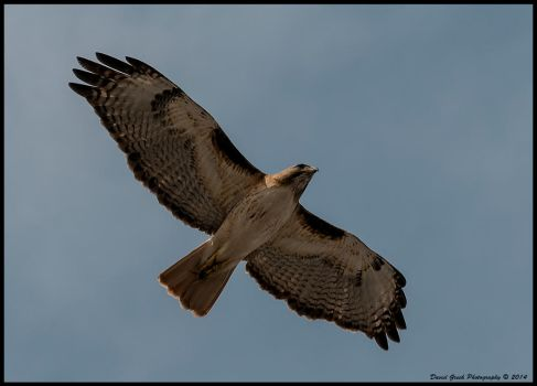 Fly by by AirshowDave