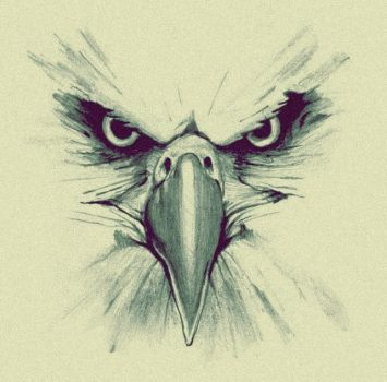 Eagle drawing by zapito23
