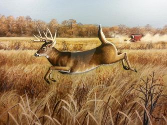 High Tailing It, White tailed Deer Buck by pm3013