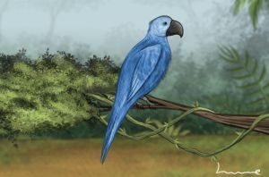 Blue Spix Macaw by Louisetheanimator